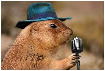 hamster with mic and hat